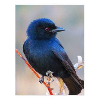 Paisaje azul hermoso de la naturaleza del pájaro postales