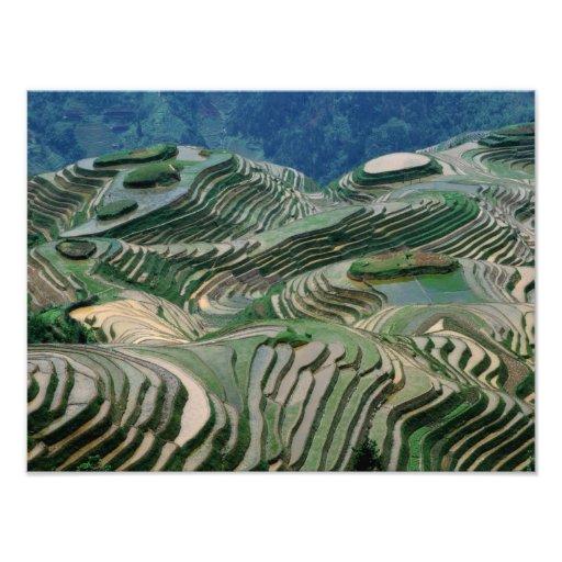 Paisaje de las terrazas del arroz en la montaña, impresion fotografica