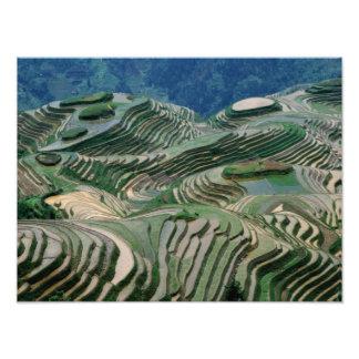 Paisaje de las terrazas del arroz en la montaña, impresión fotográfica
