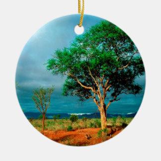 Paisaje del africano del árbol ornatos