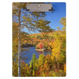 Paisaje del árbol del otoño, Maine