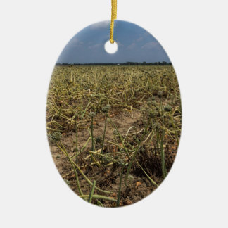 Paisaje del campo de la cebolla en Georgia Adorno Navideño Ovalado De Cerámica
