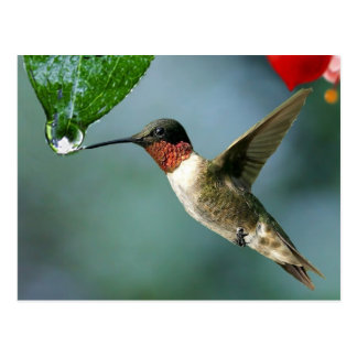 Paisaje hermoso de la naturaleza del colibrí postal