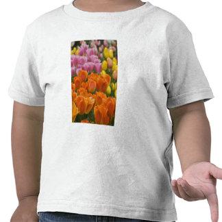 Países Bajos aka Holanda), Lisse. Keukenhof 4 Camisetas