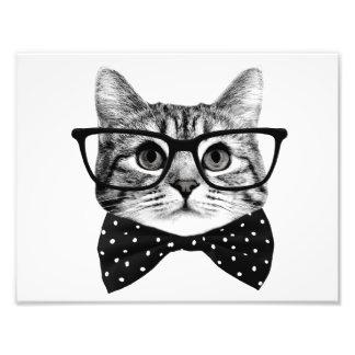 pajarita del gato - gato de los vidrios - gato de foto