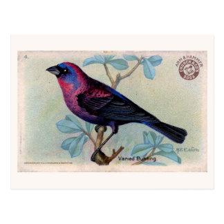 Pájaro 04 del vintage postal