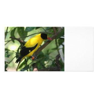 Pájaro amarillo y negro brillante en árbol tarjeta fotográfica