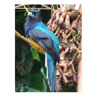 Pájaro azul de largo atado postal