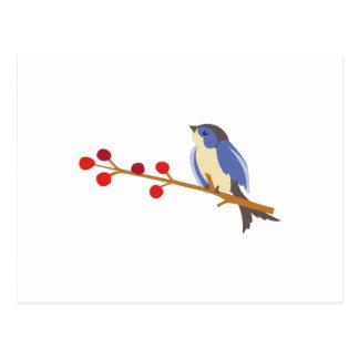Pájaro azul del invierno en rama postal