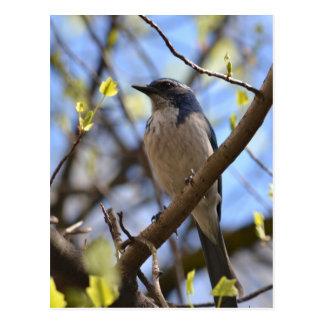Pájaro azul en un árbol postal