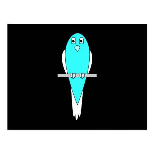 Pájaro azul y blanco. Parakeet. Negro Postal