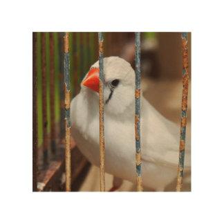 Pájaro blanco del pinzón de cebra en jaula impresión en madera