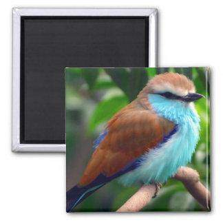Pájaro colorido imán