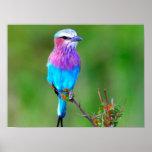 Pájaro colorido impresiones