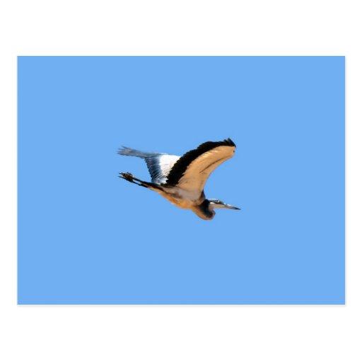 Pájaro con alas de la garza de gran azul en vuelo postal
