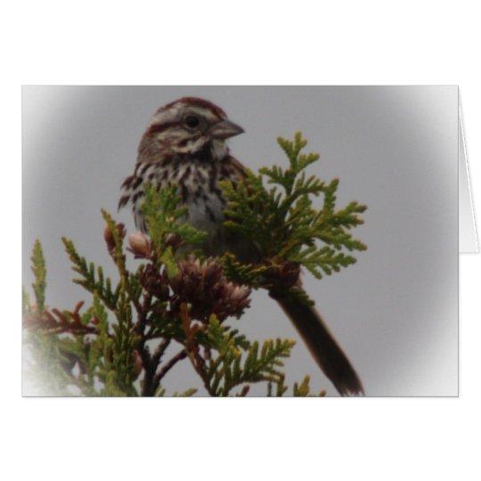 Pájaro de la canción tarjeta de felicitación