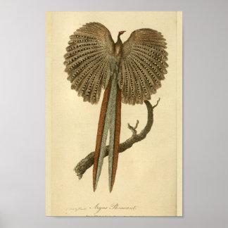 Pájaro de la impresión de la historia natural del