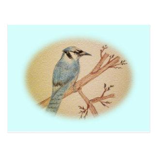 Pájaro del arrendajo azul postal