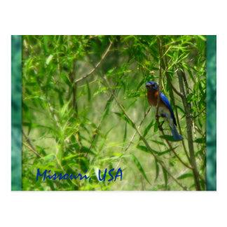 Pájaro del azul de Missouri Postal
