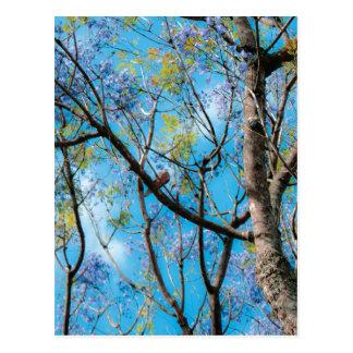 Pájaro del cielo azul de la fotografía de la natur postal
