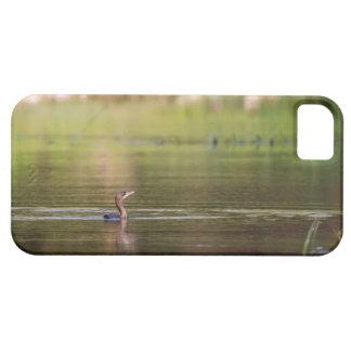 Pájaro del cormorán que nada pacífico funda para iPhone SE/5/5s