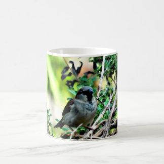 Pájaro del invierno en la taza de café de la