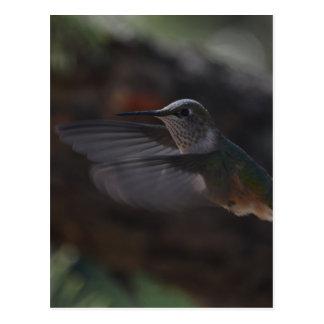 Pájaro del tarareo postal