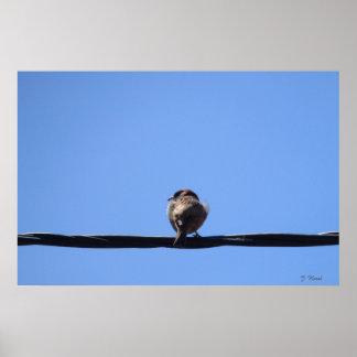 Pájaro en el alambre eléctrico, cielo azul, poster