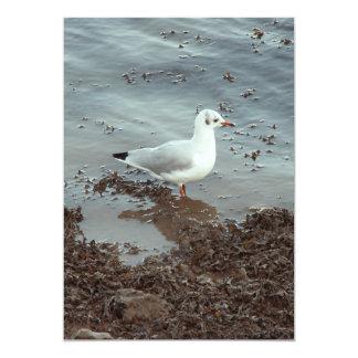 Pájaro en el borde del agua. Gaviota de cabeza Invitacion Personal