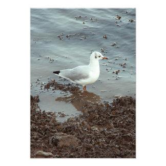 Pájaro en el borde del agua Gaviota de cabeza neg Invitación Personalizada
