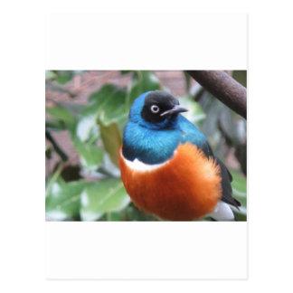 Pájaro exótico hermoso encaramado postal