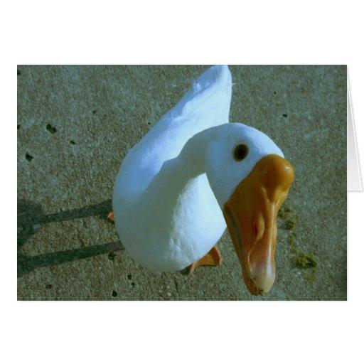 Pájaro Gimme de los gansos del ganso alguna tarjet Felicitacion