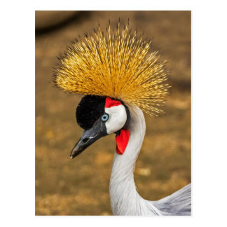 Pájaro hermoso de la grúa tarjetas postales