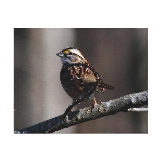 Pájaro, impresión envuelta de la lona