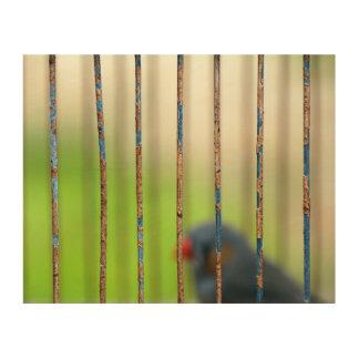Pájaro, jaula, barras impresión en madera