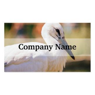 Pájaro joven de la cigüeña, fotografía animal del plantillas de tarjetas personales