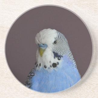 Pájaro macro precioso de Budgie Posavasos De Arenisca