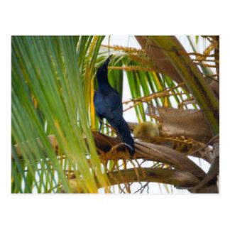 Pájaro negro postal