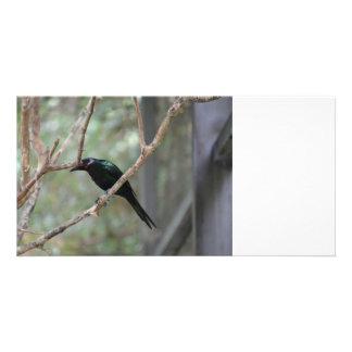 pájaro observado rojo que mira abajo tarjetas fotograficas