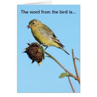 Pájaro (pinzón) en tarjeta de cumpleaños secada