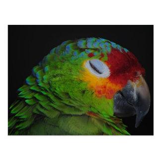 Pájaro rojo de Lored el Amazonas que guiña la post Postal