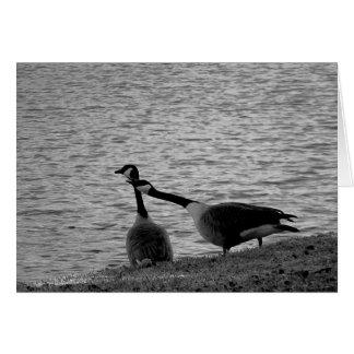 Pájaros B&W del amor Tarjeta