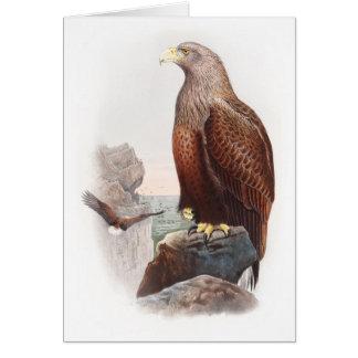 Pájaros de Eagle de mar Juan Gould de la Tarjeta De Felicitación