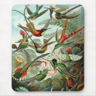 Pájaros de Haeckel Alfombrilla De Ratón