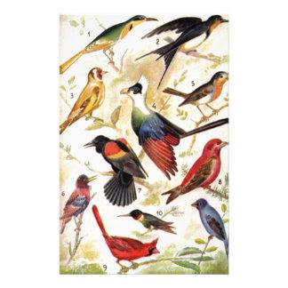 Pájaros de hemosos colores - Papeleria Papelería