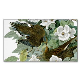 Pájaros de John James Audubon de la paloma de Tarjetas De Visita Magnéticas (paquete De 25)