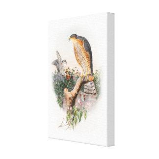 Pájaros de Juan Gould del halcón de gorrión de Lienzo