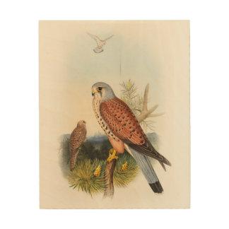 Pájaros de Juan Gould del halcón del cernícalo de Impresión En Madera