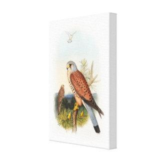 Pájaros de Juan Gould del halcón del cernícalo de Lienzo