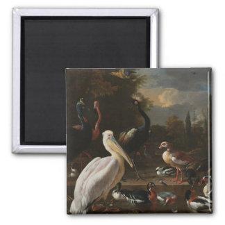 Pájaros de la bella arte imanes